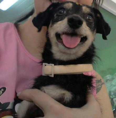 Cão adotado